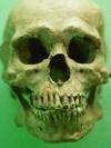 Morph Skull's Face Online -