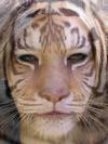 Tiger and Avril Lavigne