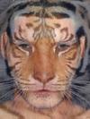 David Beckham and Tiger
