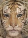 Jessica Alba and Tiger
