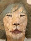 Kwon Sang Woo and Lion